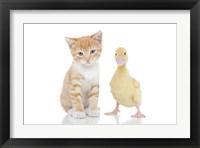 Framed Kittens 19