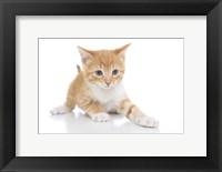 Framed Kittens 2