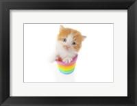 Framed Kittens 21