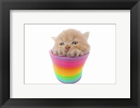 Framed Kittens 22