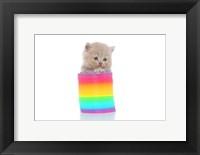 Framed Kittens 23