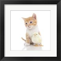 Framed Kittens 24