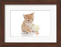 Framed Kittens 25