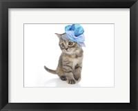 Framed Kittens 27