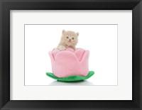 Framed Kittens 29