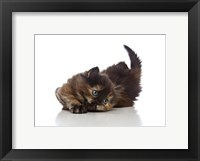 Framed Kittens 32