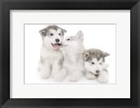 Framed Puppies 1