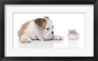 Framed Puppies 8