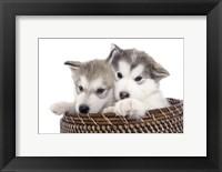 Framed Puppies 16