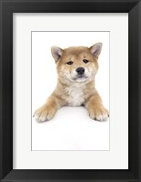 Framed Puppies 17