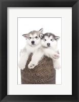 Framed Puppies 18