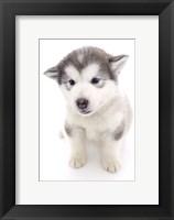 Framed Puppies 19