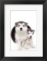 Framed Puppies 2