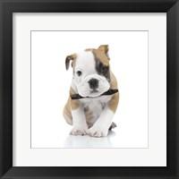Framed Puppies 21