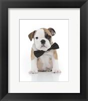 Framed Puppies 22