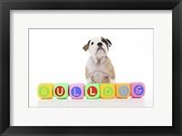 Framed Puppies 24