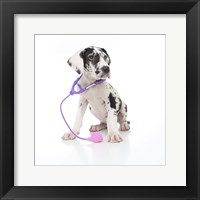 Framed Puppies 26