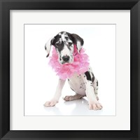 Framed Puppies 31