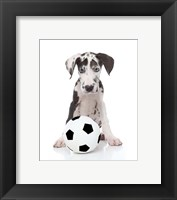 Framed Puppies 36