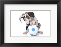 Framed Puppies 37