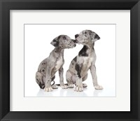 Framed Puppies 4