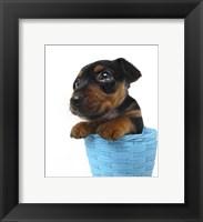Framed Puppies 46
