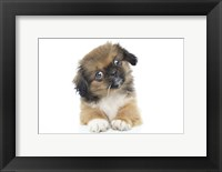 Framed Puppies 51
