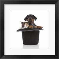Framed Puppies 52