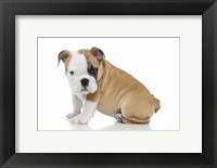 Framed Puppies 56