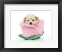 Framed Puppies 6