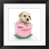 Framed Puppies 61