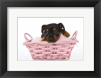 Framed Puppies 65