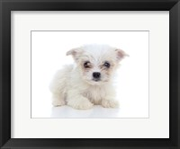 Framed Puppies 67