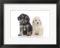 Framed Puppies 68