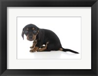 Framed Puppies 72
