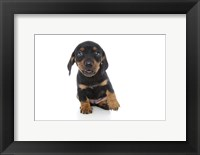 Framed Puppies 73