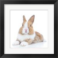 Framed Rabbits 8