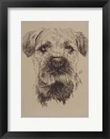 Framed Border Terrier