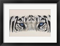 Framed Eye-Catching White Tiger