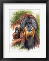 Framed Orangutan Soul