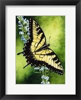 Framed Fragile Beauty