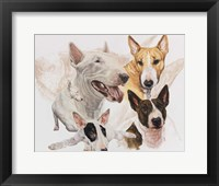 Framed Bull Terrier with Ghost Image
