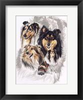 Framed Collie