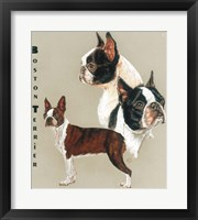 Framed Boston Terrier