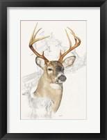 Framed White Tailed Deer