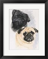 Framed Pugs