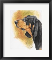 Framed Black and Tan CoonHound