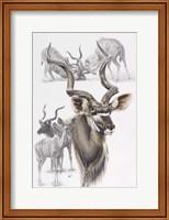 Framed Kudu