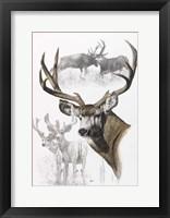 Framed Mule Deer