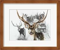 Framed Axis Deer